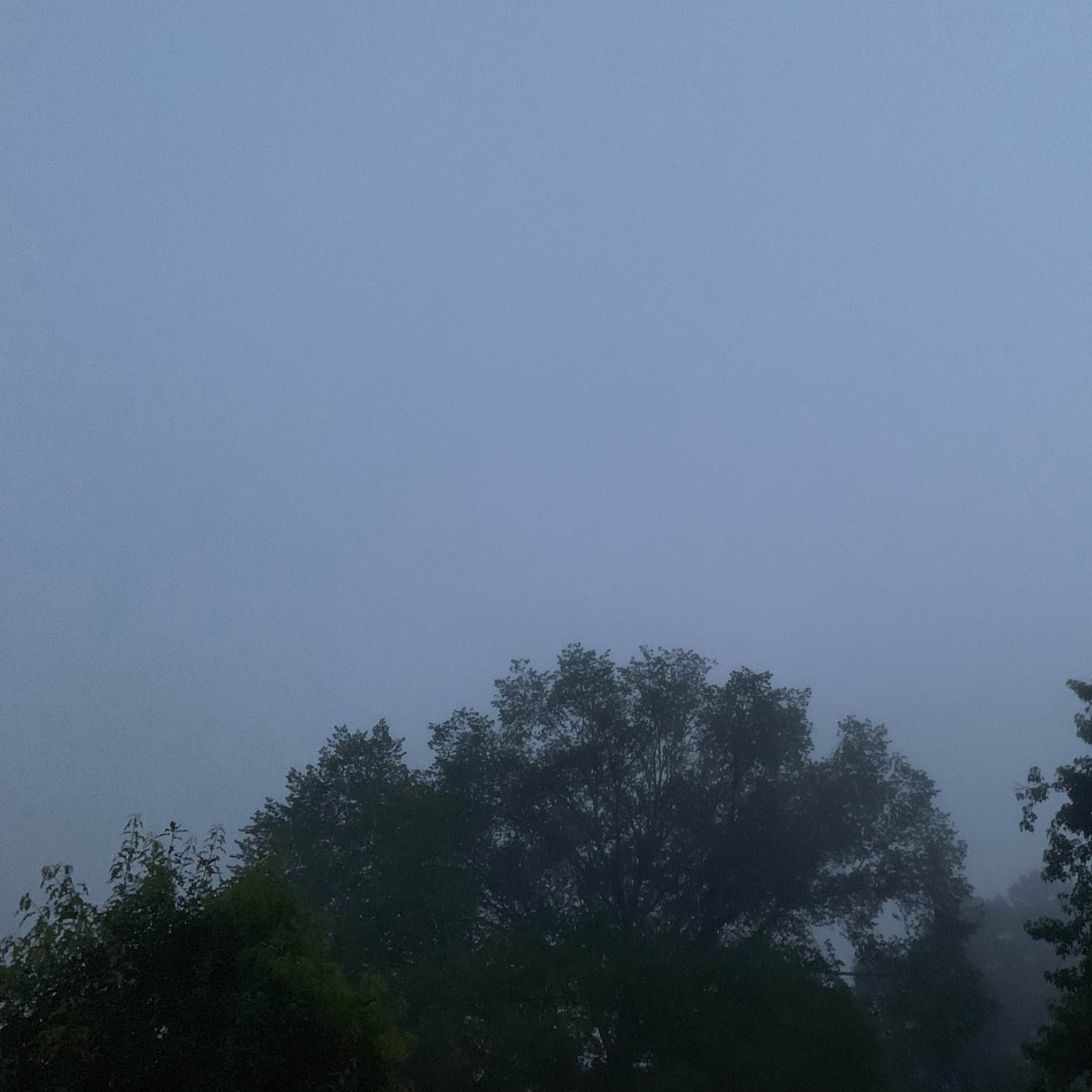 Morning fog obscures tree tops