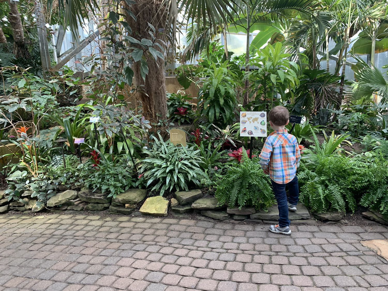 Little boy reads a sign at botanical guardians